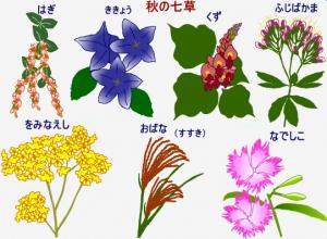 秋の七草イラスト