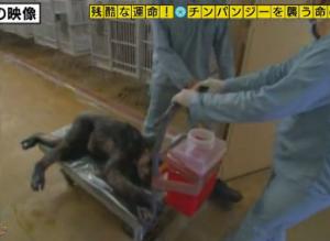 新薬の動物実験