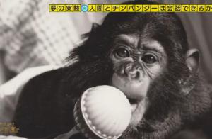 チンパンジーニム
