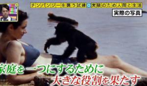 母乳で育ったチンパンジー