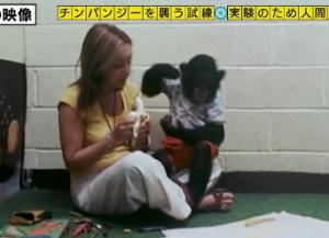 チンパンジー人間の子