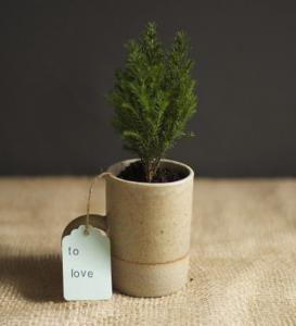 手作り植木